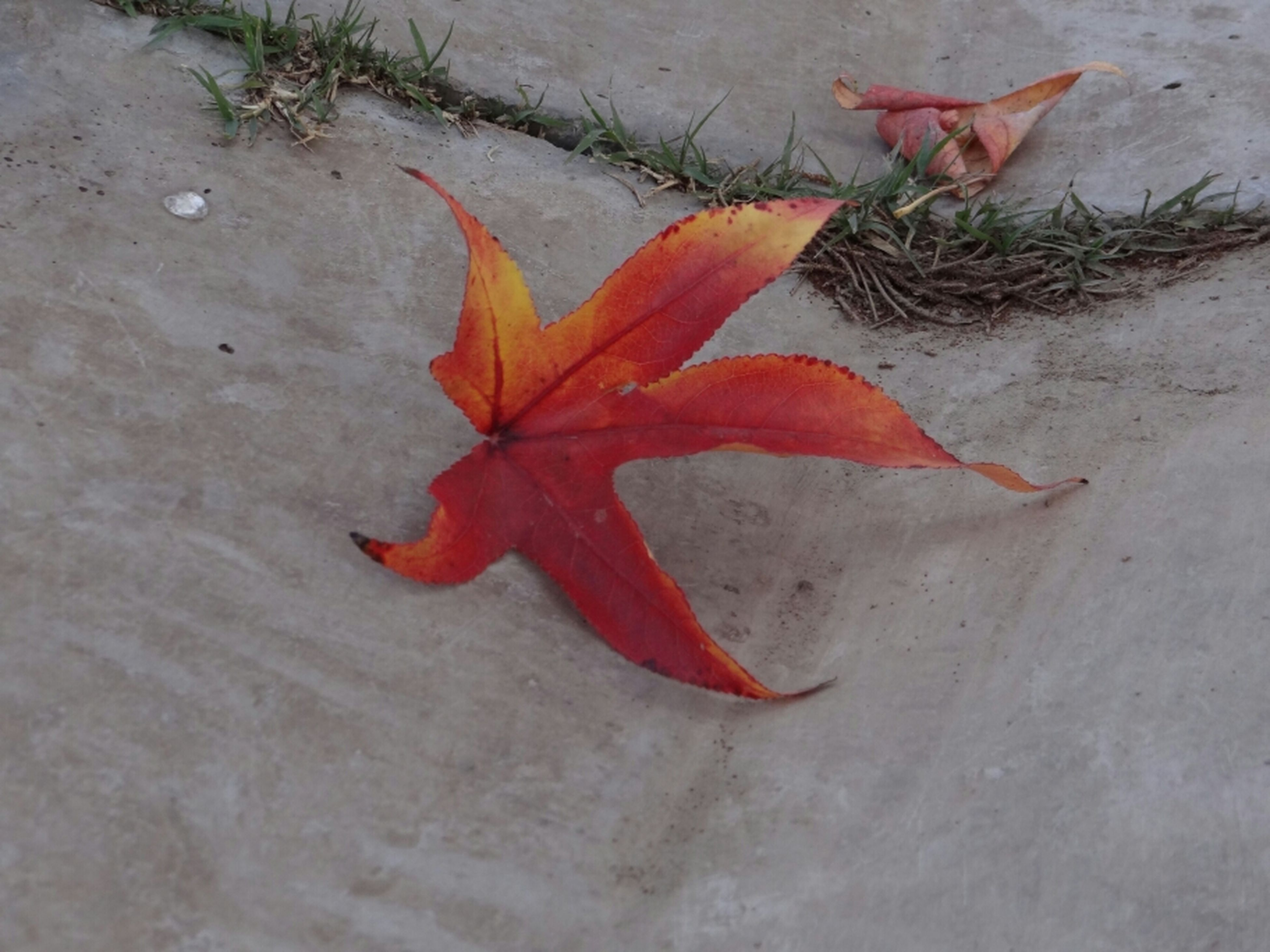 leaf, autumn, change, high angle view, maple leaf, dry, fallen, leaves, orange color, red, season, close-up, nature, ground, directly above, day, no people, outdoors, flooring, street