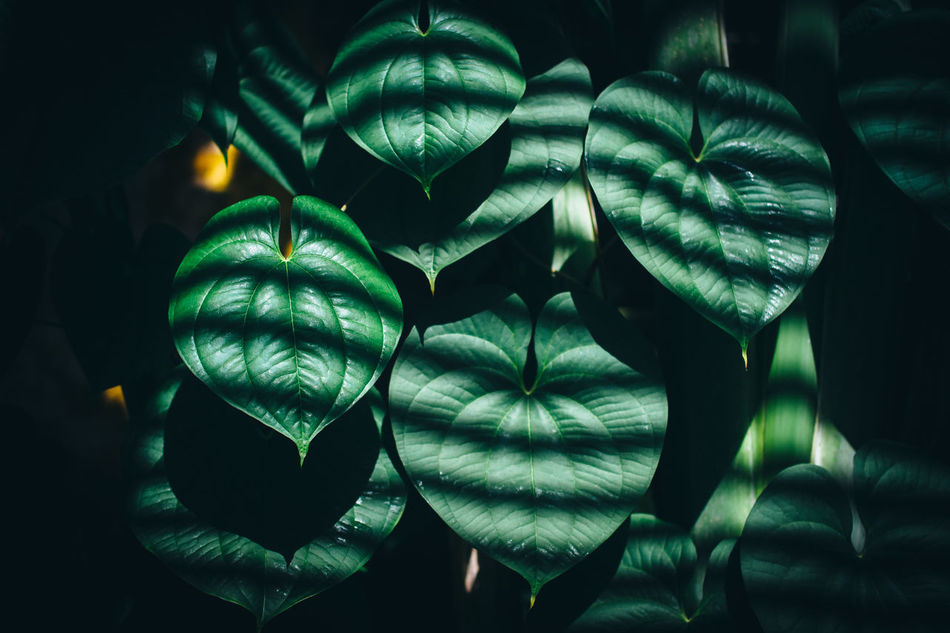 Beautiful stock photos of light, Close-up, beauty In Nature, botany, day