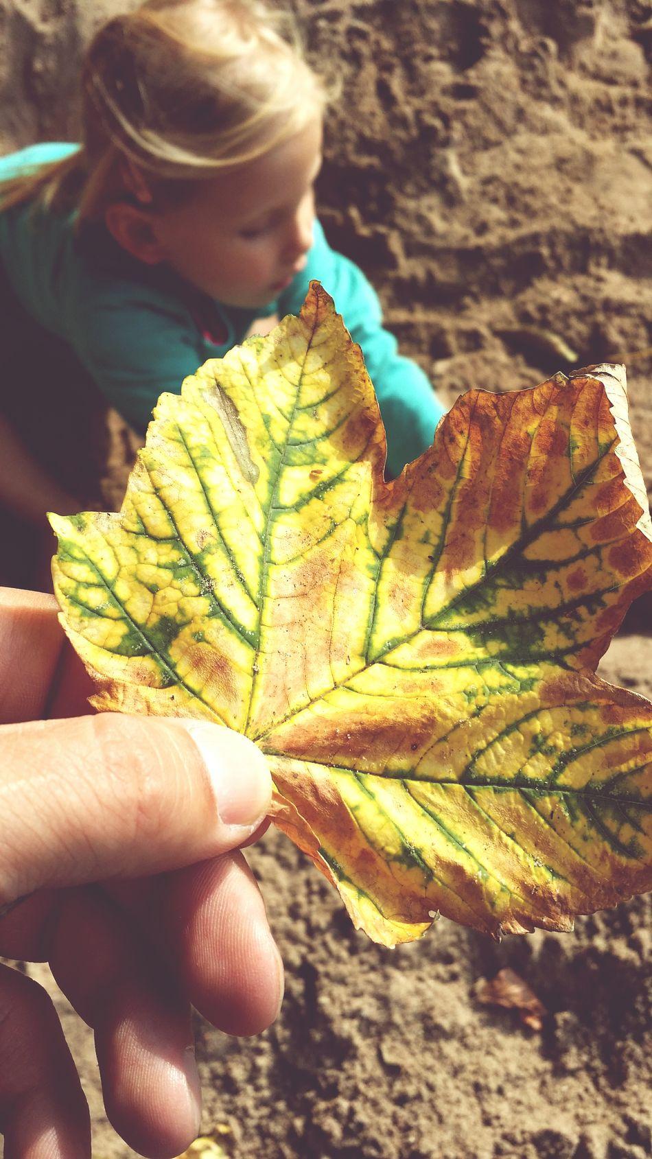 Autumn Leaves Leaves Playground Kids Season  Nature Outdoors Focus On Foreground Leaf