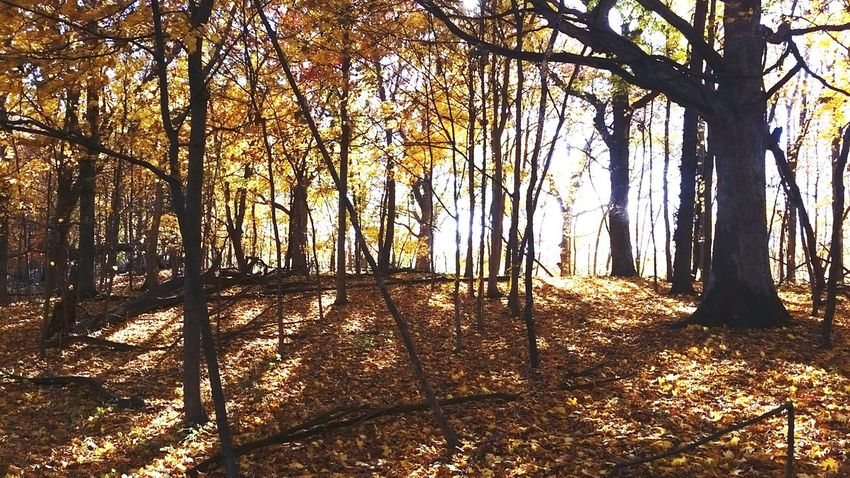 Another picture of beautiful fall