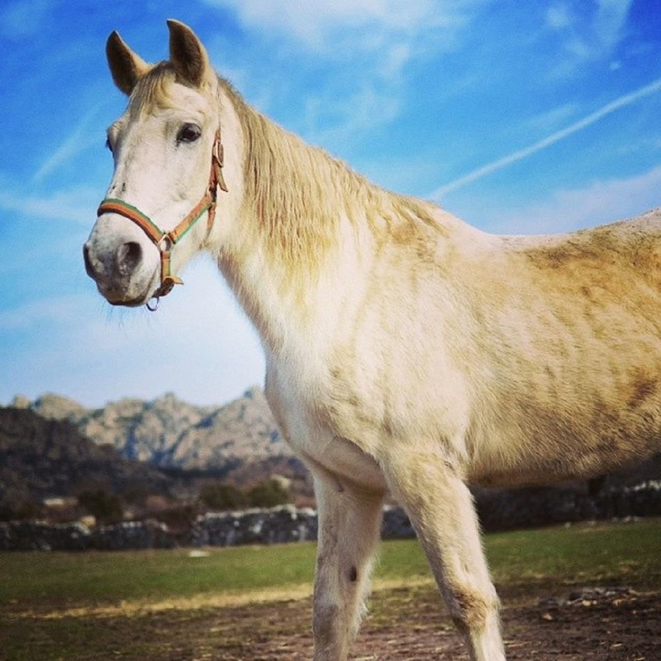 Beautiful stock photos of white, Animal Themes, Bridle, Cloud - Sky, Cloudy