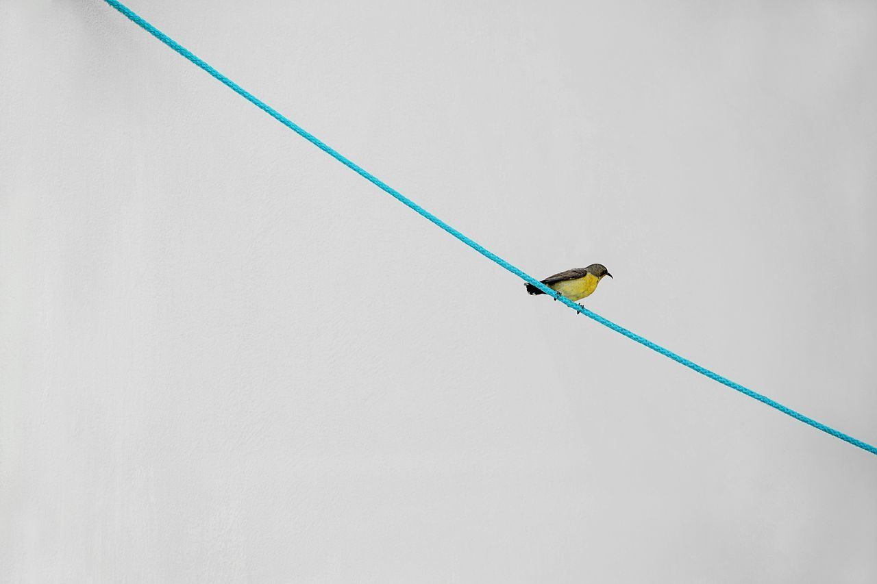 InMakin! outdoors bird minimalism Bright colors