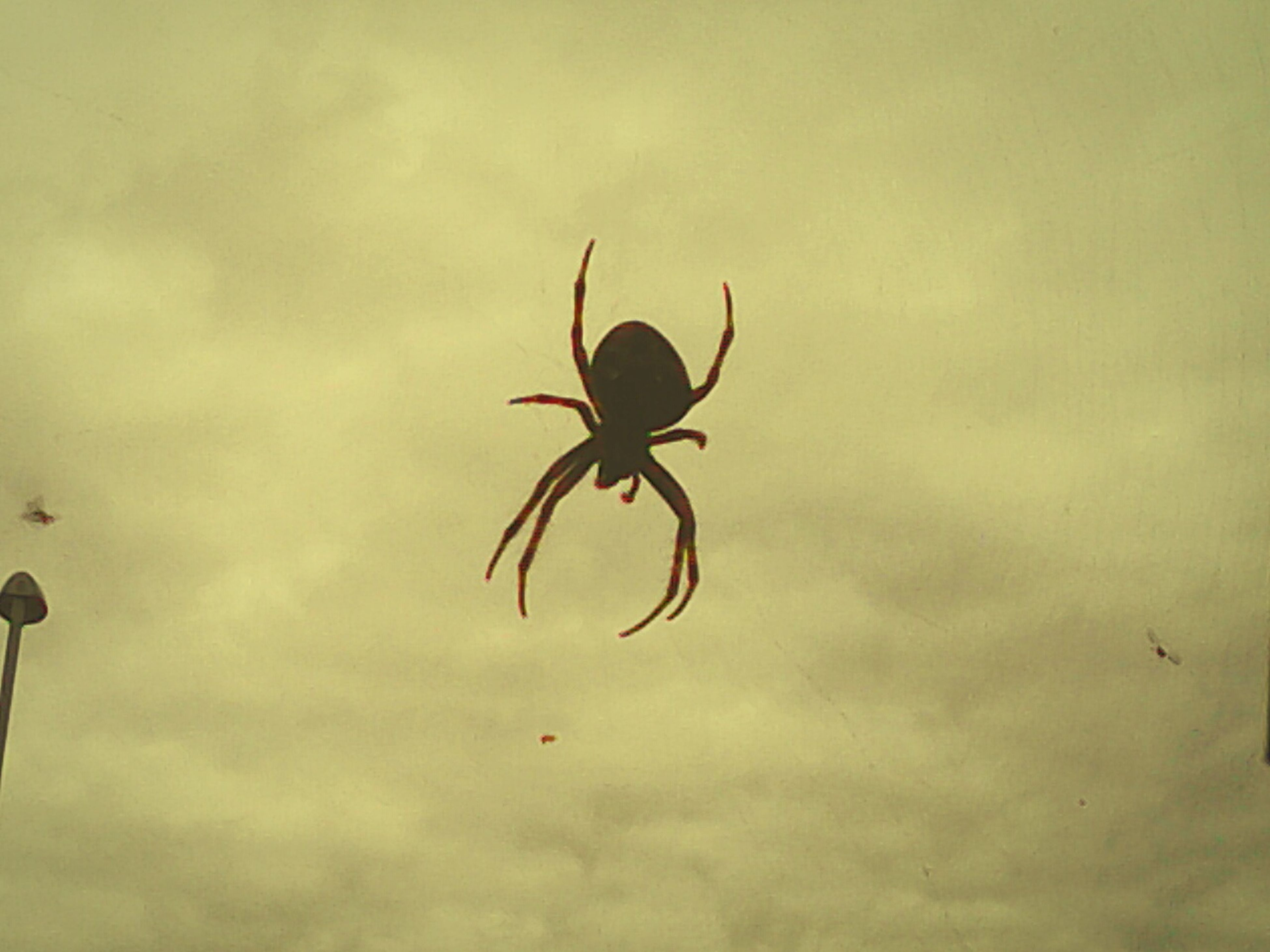 animal themes, insect, animals in the wild, one animal, spider, wildlife, low angle view, sky, silhouette, spider web, nature, close-up, indoors, full length, no people, focus on foreground, day, cloud - sky, mid-air