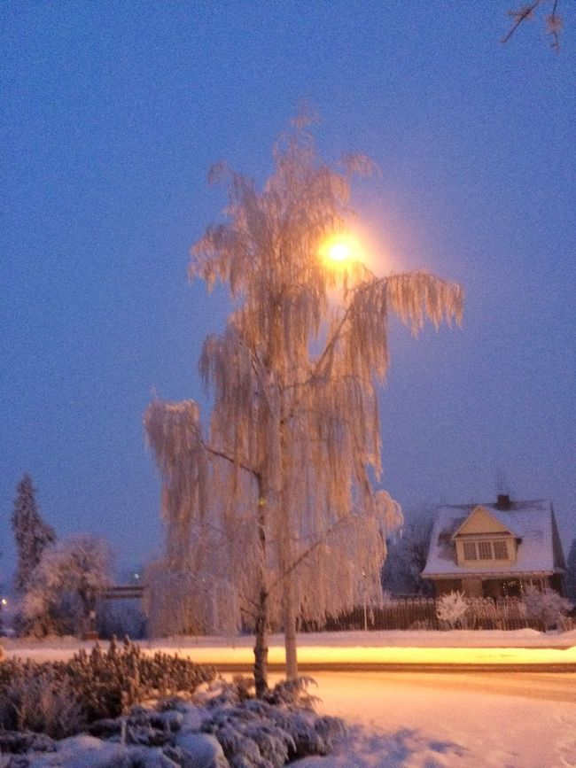 Early Morning Frost Tree Snow Winter Wonderland