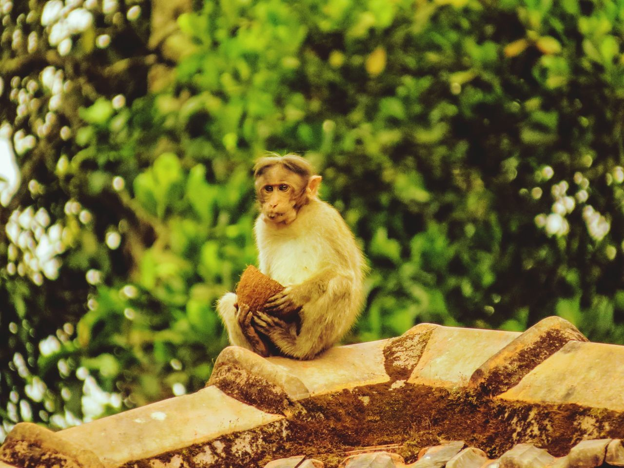 animal themes, animals in the wild, one animal, mammal, day, outdoors, no people, focus on foreground, animal wildlife, monkey, tree, sitting, nature
