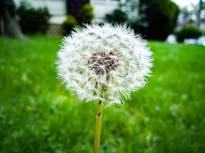 Flower Set 2 RahimNoel Rahim NY NYC New York Brooklyn ❤ Calm Flower Inspirational Beauty In Nature