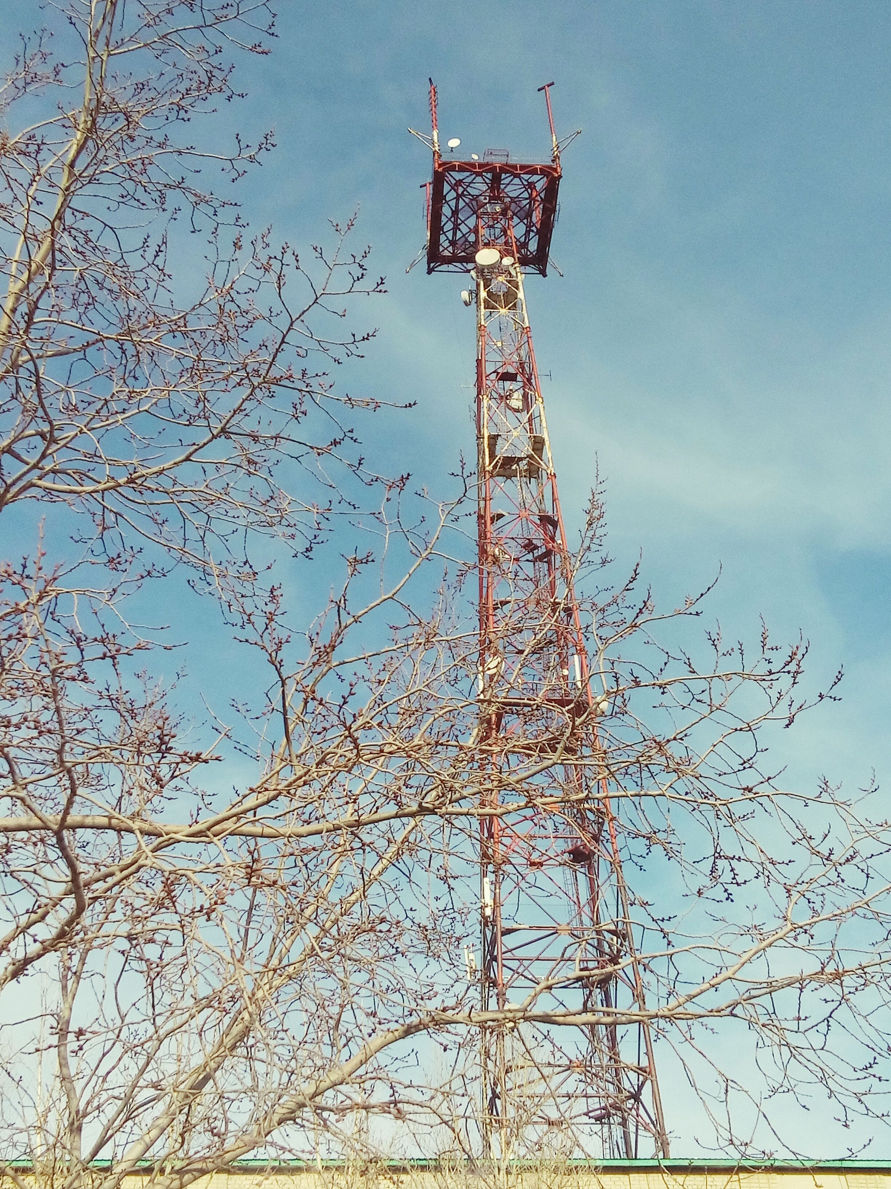 low angle view, tree, tall - high, tower, sky, built structure, architecture, clear sky, branch, communications tower, day, outdoors, no people, bare tree, metal, blue, building exterior, eiffel tower, tall, communication