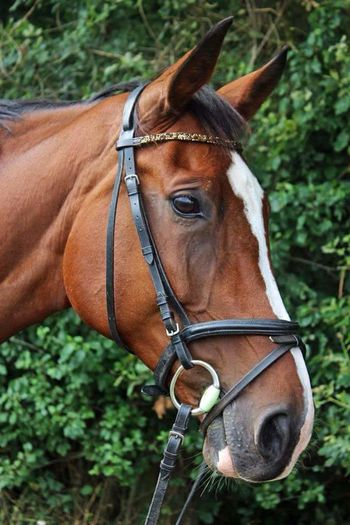 Horse Domestic Animals Animal Themes Brown No People Outdoors Green Equestrian Equestrian Life Pet Portraits Horse Photography  Riding Domestic Animal Germany Europe Eu Sweet Animal Cute Sweetness Animals Adventure Nature Scenery One Animal