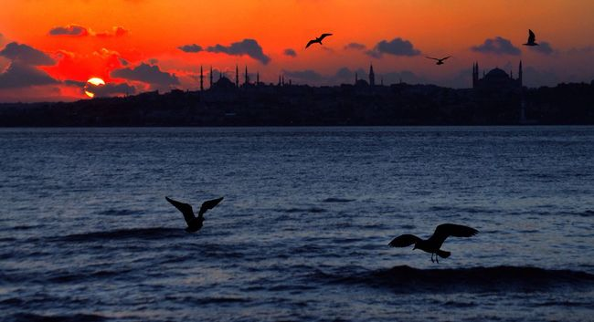 Sunset in Istanbul with seagulls... Hanging Out Hello World Eye4photography  EyeEmBestPics EyeEm Best Shots EyeEm Best Shots - Sunsets + Sunrise Sun_collection Sunset EyeEm Best Shots - Landscape Enjoying Life
