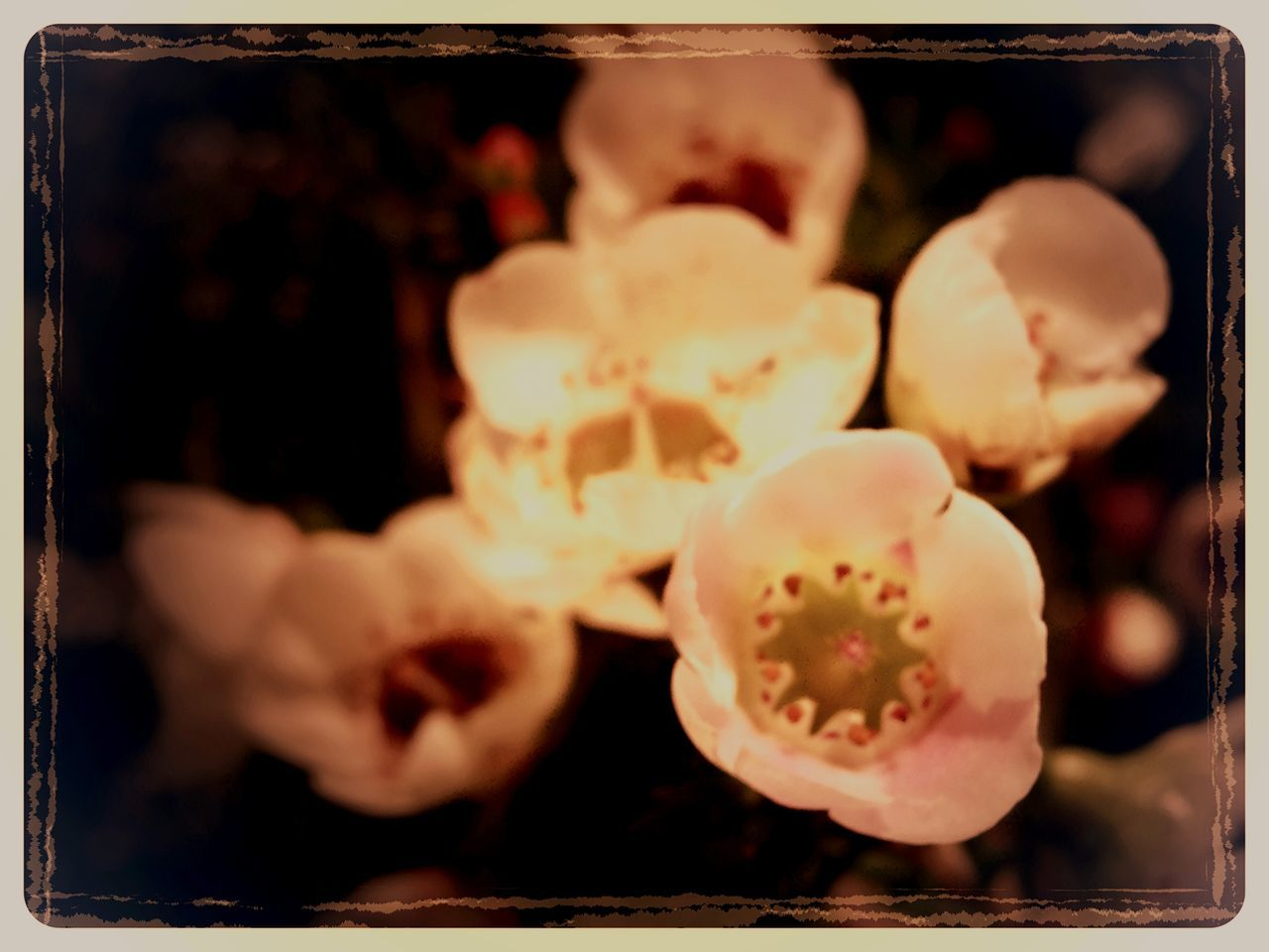 close-up, selective focus, no people, freshness, indoors, nature, night, food