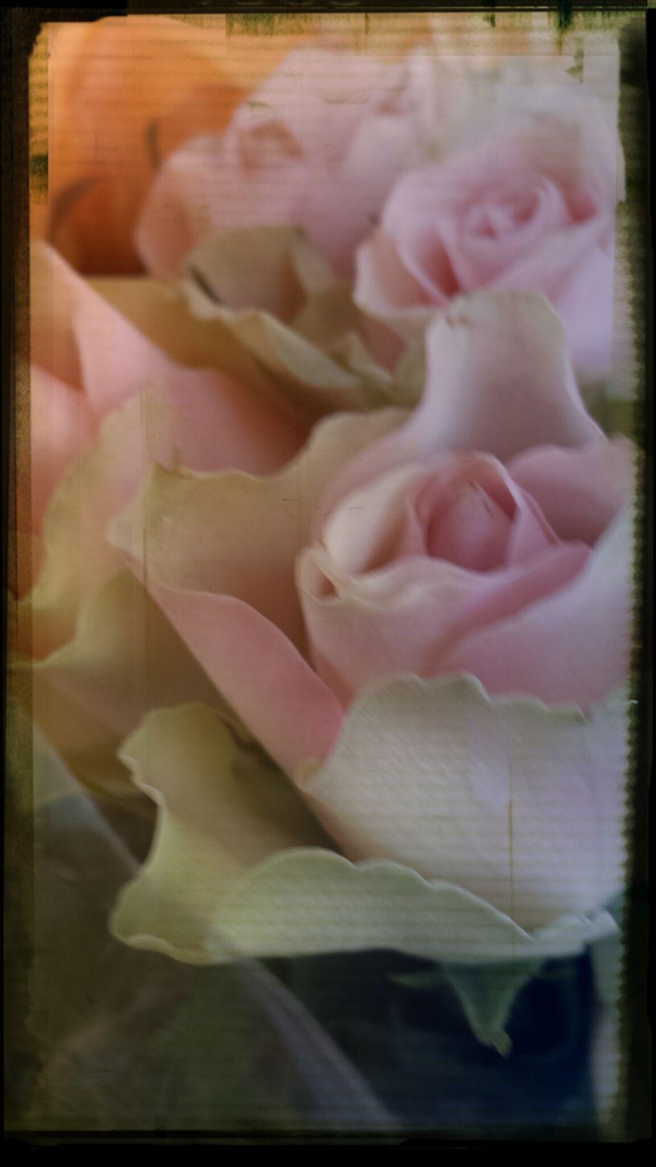 Flower Power Flower Art Flowers Fowlers Toad artflowers flowerstream BloomingGreat MyFavRoses flowerforyou beautiful awasome