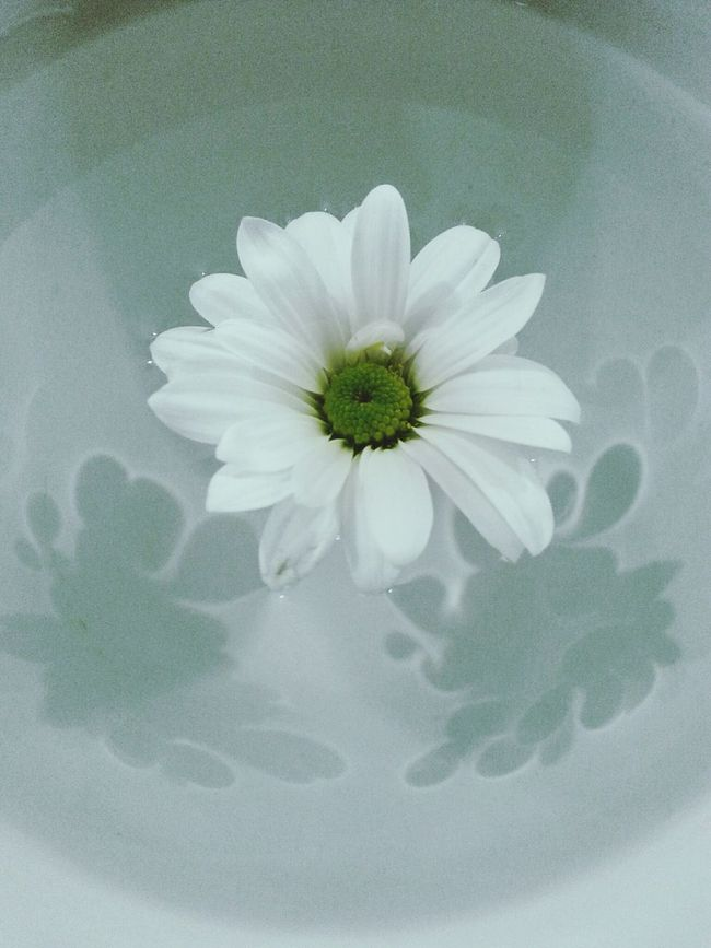 Daisy White Flower Popular Photos Photography Wonderfultime Taking Photos Lovely