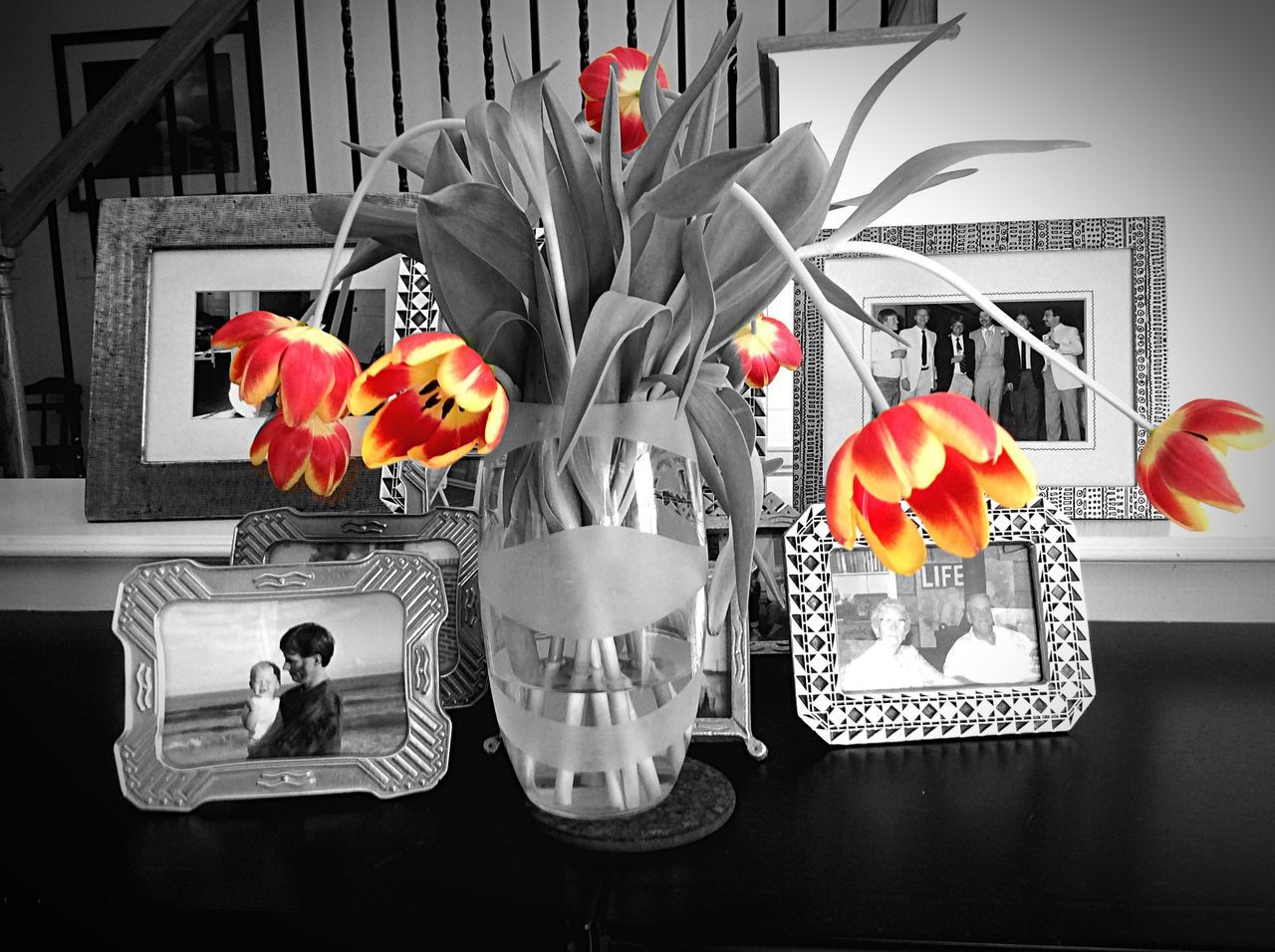 Flower Vase Tulip Indoors  Black And White Color Of Tulips Orange Still Life Photography Flower Arrangement Beauty In Nature Flower Head In Bloom IPhoneography