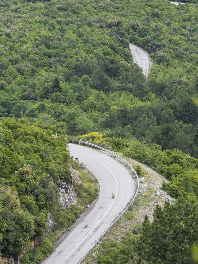 The road and the goats Animal Animals Country Road Curve Day Goat Green Green Green Color High Angle View Mountain Nature Non-urban Scene Olympus Mountain Outdoors Road Scenics Summer Tranquil Scene Tranquility Tree Turn Winding Road