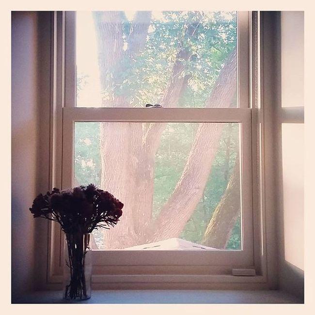 Wednesday morning Dailypractice Morningmeditation Gratitude Love vcsocam vscogood