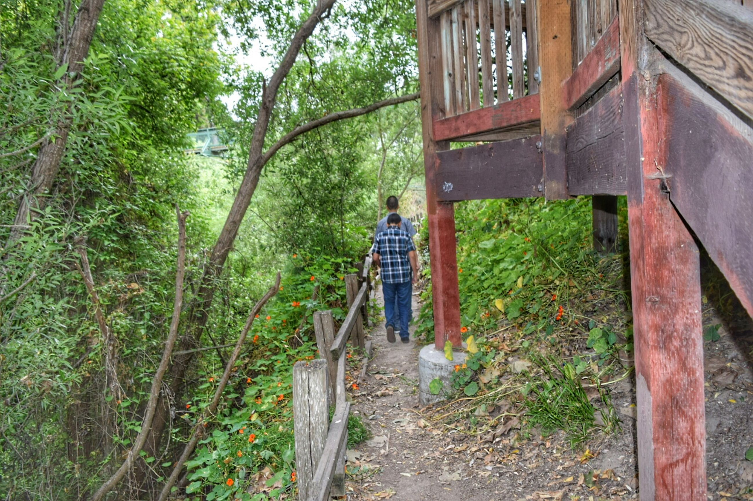 lifestyles, leisure activity, full length, tree, casual clothing, rear view, standing, built structure, green color, men, plant, day, growth, architecture, walking, outdoors, building exterior, wood - material