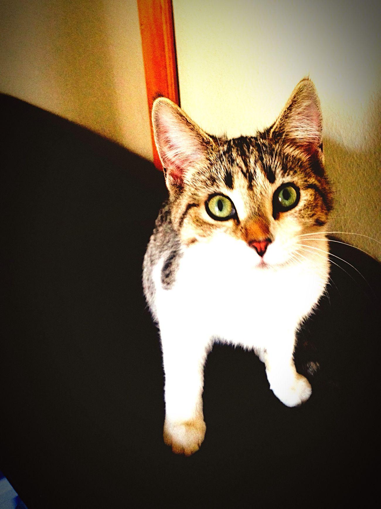My kitten!