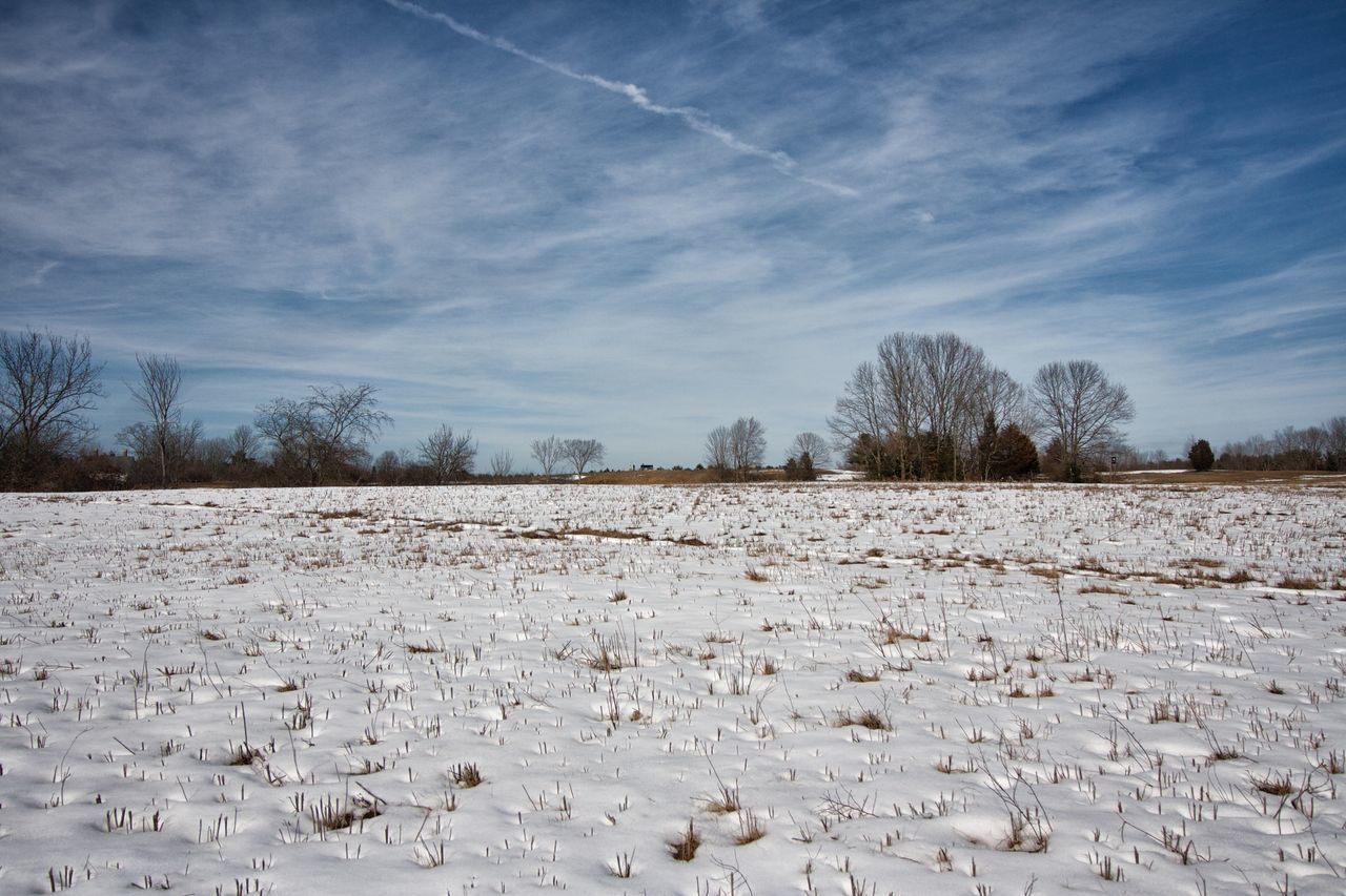 Wagon Hill Farm Bare Tree Beauty In Nature Cloud - Sky Day Field Nature No People Outdoors Sky Snow Tree