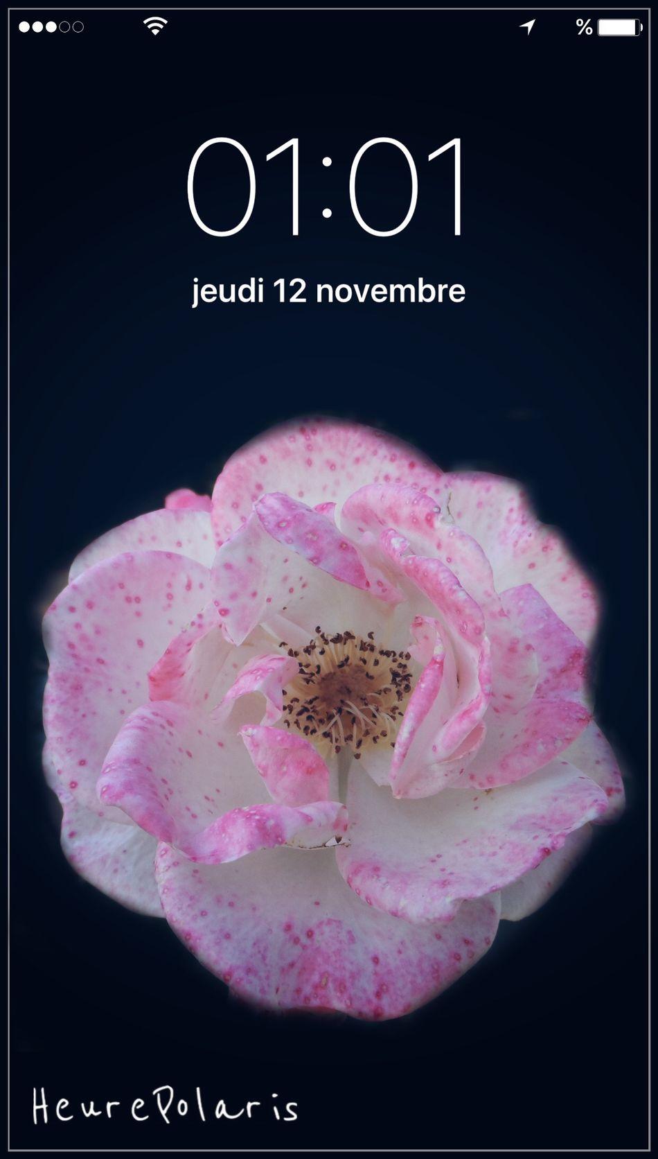 01H01 🌺 HEURE POLARIS Flower Fleur Heure Time Hour Sur Les Chemins Balade