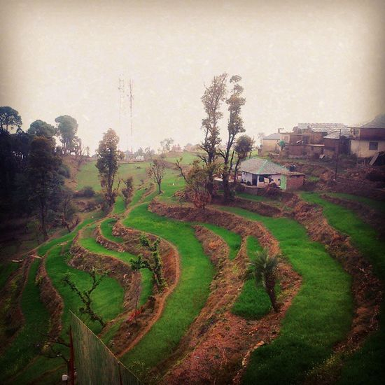 Step Farming Greenery Winters 2015  Dharamshala Green Fields LetItBe Foggy Weather Mothernature Dnd Himachalpradesh Himachalpictures Sunday ITC XPERIA Gth