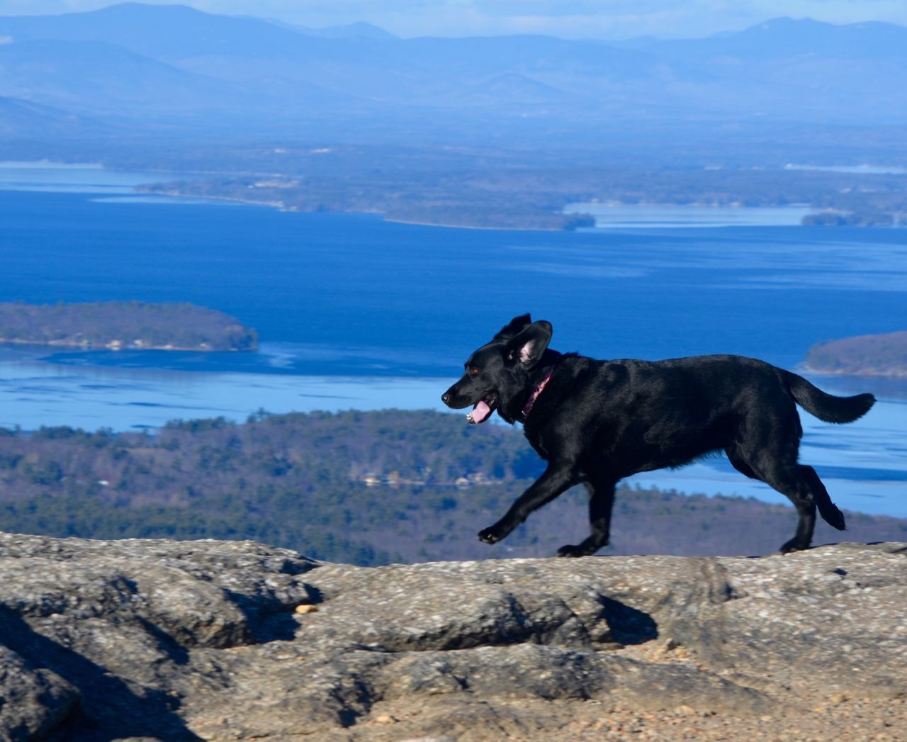 Lake Labrador Retriever lScenics Cold Temperature No People Beauty In Nature Water Black Color Mountains Mountain Range Rocks And Water Running Dog View From Above Hikingadventures