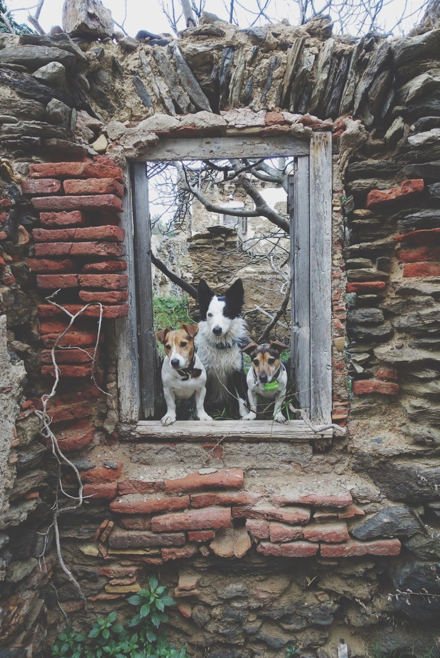 Dogs Looking Through Window Of Abandoned House