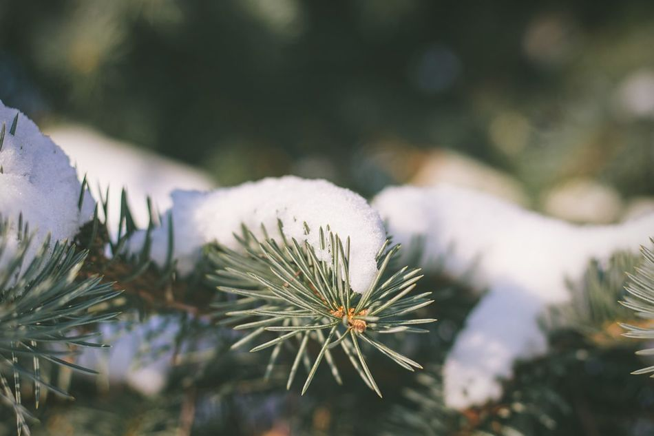Macro Beauty Showcase: January Snow ❄ Snow Bokeh Photography Bokeh Open Edit EyeEm Best Shots The EyeEm Facebook Cover Challenge The Week On Eyem The Weekend On EyeEm Nature_collection EyeEm Nature Lover Herringbone