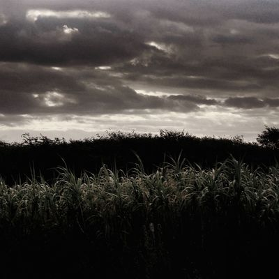 Agriculture Beauty In Nature Cereal Plant Close-up Cloud - Sky Crop  Day Field Growth Landscape Nature No People Outdoors Rural Scene Scenics Silhouette Sky Storm Cloud Tranquil Scene Tranquility