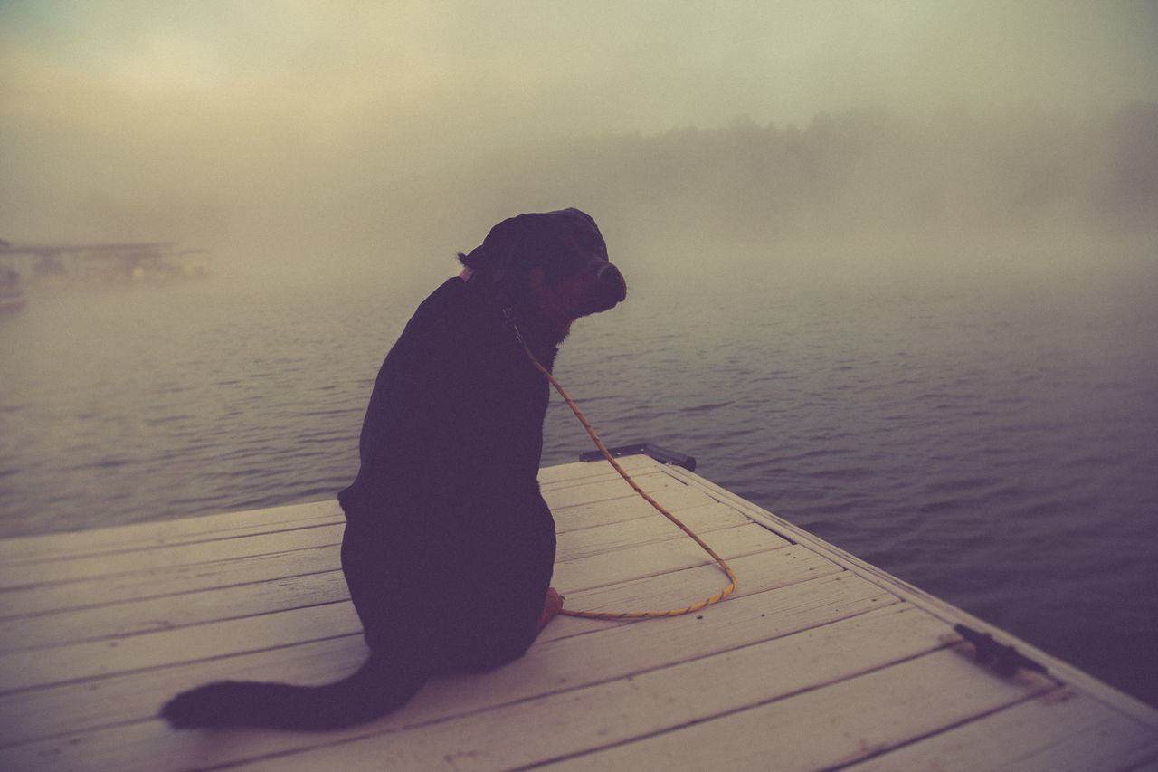 Atmosphere Atmospheric Mood Composition Day Dog Dusk Fog Foggy Lake Leisure Activity Mammal Nature Outdoors Perspective Rottweiler Water