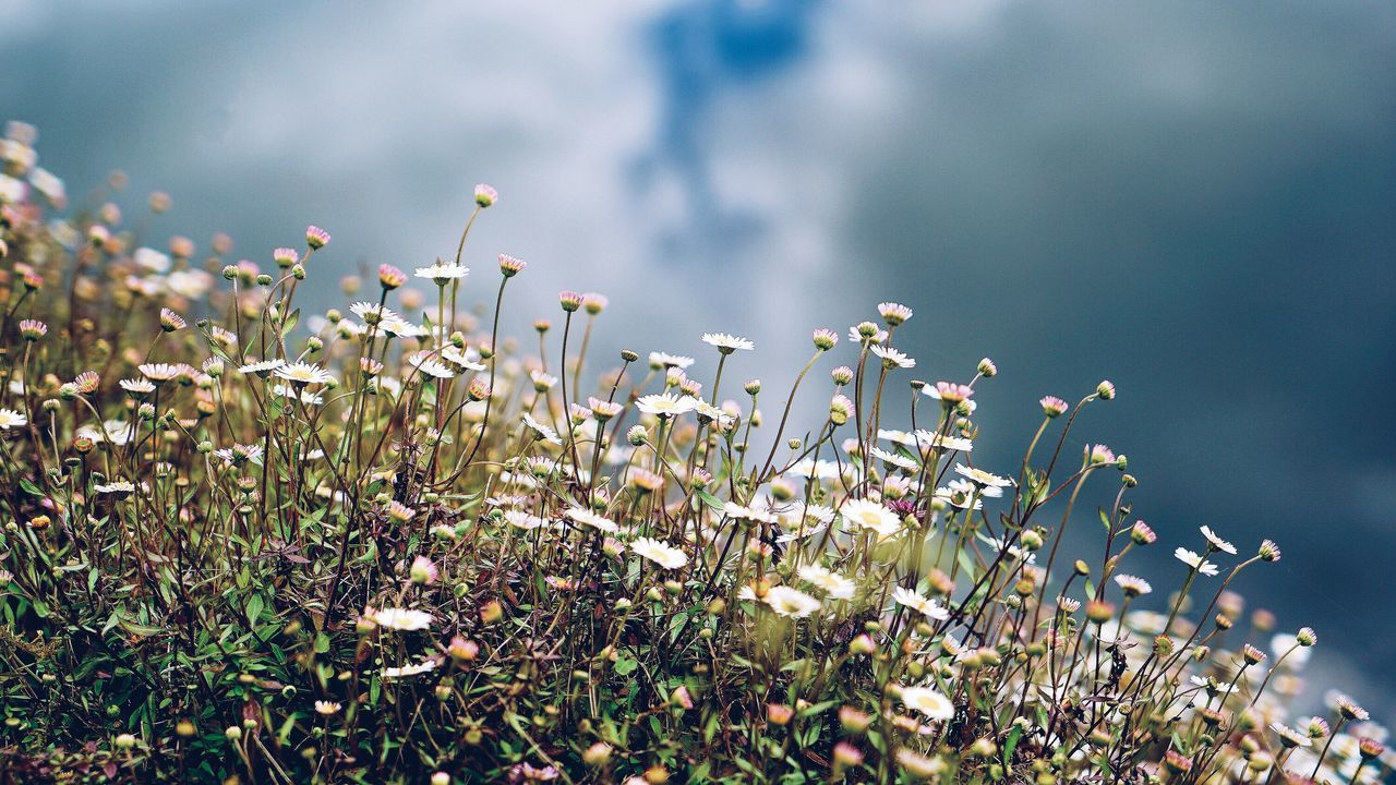 Beautiful stock photos of irland, Cloud, Day, Detail, Flower