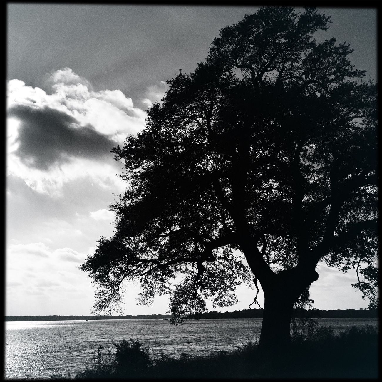 In the shadows of the tree... Blackandwhite Tree Sun River View Water