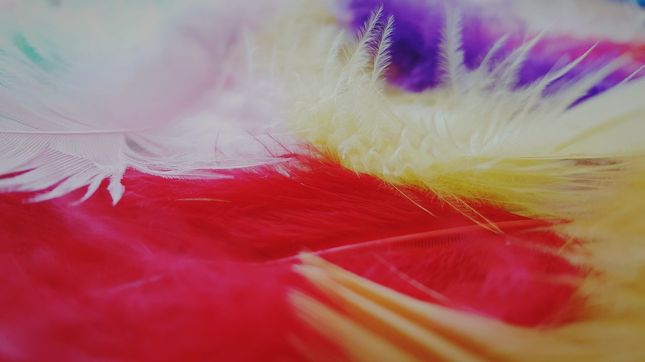 feather, selective focus, softness, close-up, indoors, fragility, no people, day