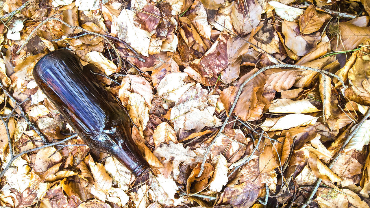High Angle View Of Bottle On Fallen Leaves