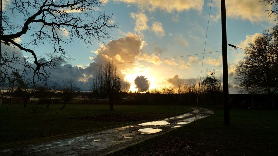 Reflecting The Heavens A Part In The Clouds Aumsville Oregon Bare Pear Tree Beauty In Nature Cloud Cloud - Sky Gravel Driveway Landscape Nature Oak Trees Outdoors Power Pole Puddles Sky Sunset The Heavens Tree