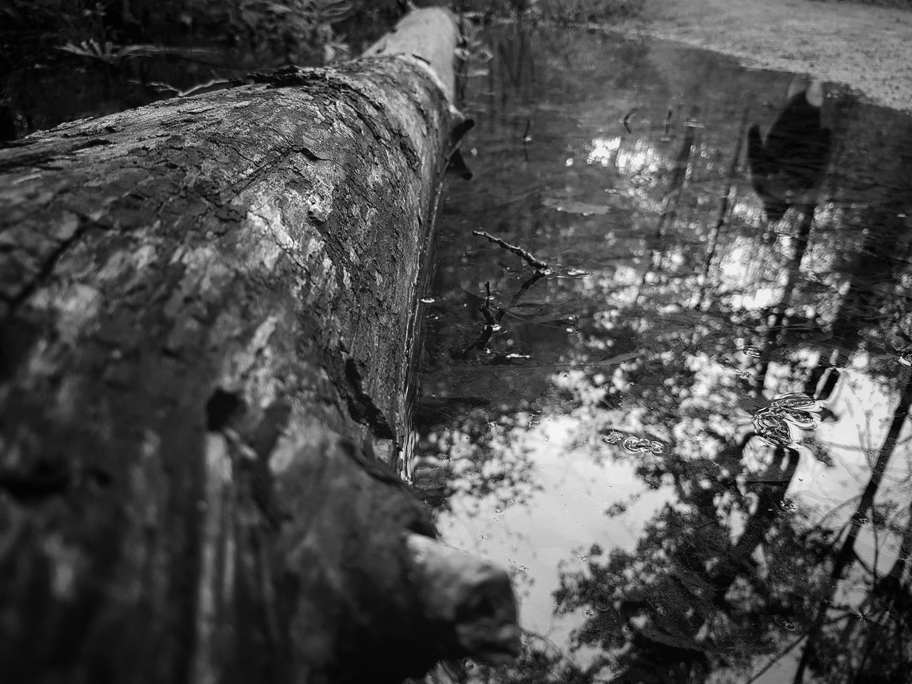 Choose your own path Outdoors Nature Reflection Blackandwhite