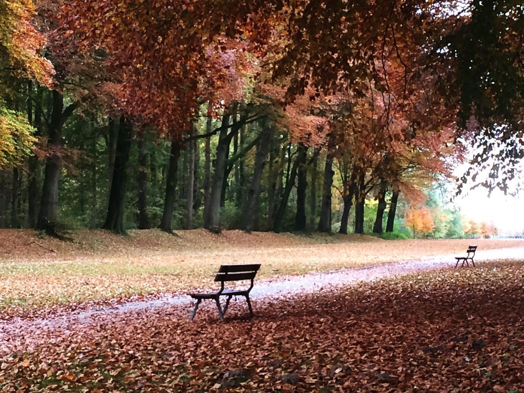 Domeindriefonteinen At Vilvoorde Belgium Autumn Autumn Leaves Autumn Colors Autumn Collection Nature Nature_collection Nature Photography EyeEm Nature Lover