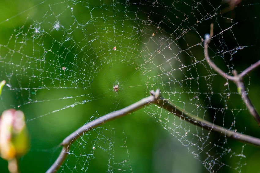Spider's web Close-up Complexity Eight Legs Insects  Little Nature Net Small Spider Spider Web Spiders Web