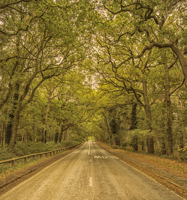 Delamere Autumn Autumn Colors Autumn Leaves Tree Trunk WoodLand Beauty In Nature Forest Greenery Nature Open Road Outdoors Road Road Marking Road Trip Scenics The Way Forward Tranquility Tree Woods