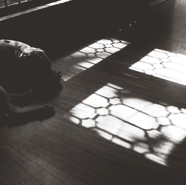 Soaking Up The Sun Bw_dogs TheMinimals (less Edit Juxt Photography )