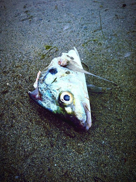 Nature On Your Doorstep Fishface Fish Out Of Water Fish Life Fish Heads Fish Heads Catch Of The Day
