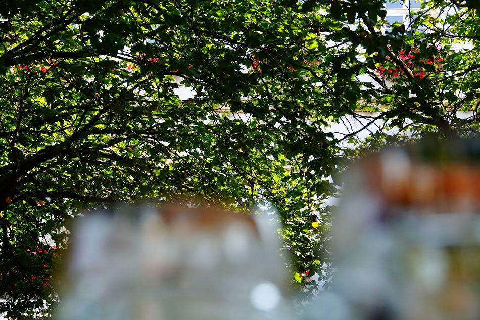 Beergarden  Biergarten Beer Beerglass Beerglasses Tree Branches Leaves_collection Leaves🌿