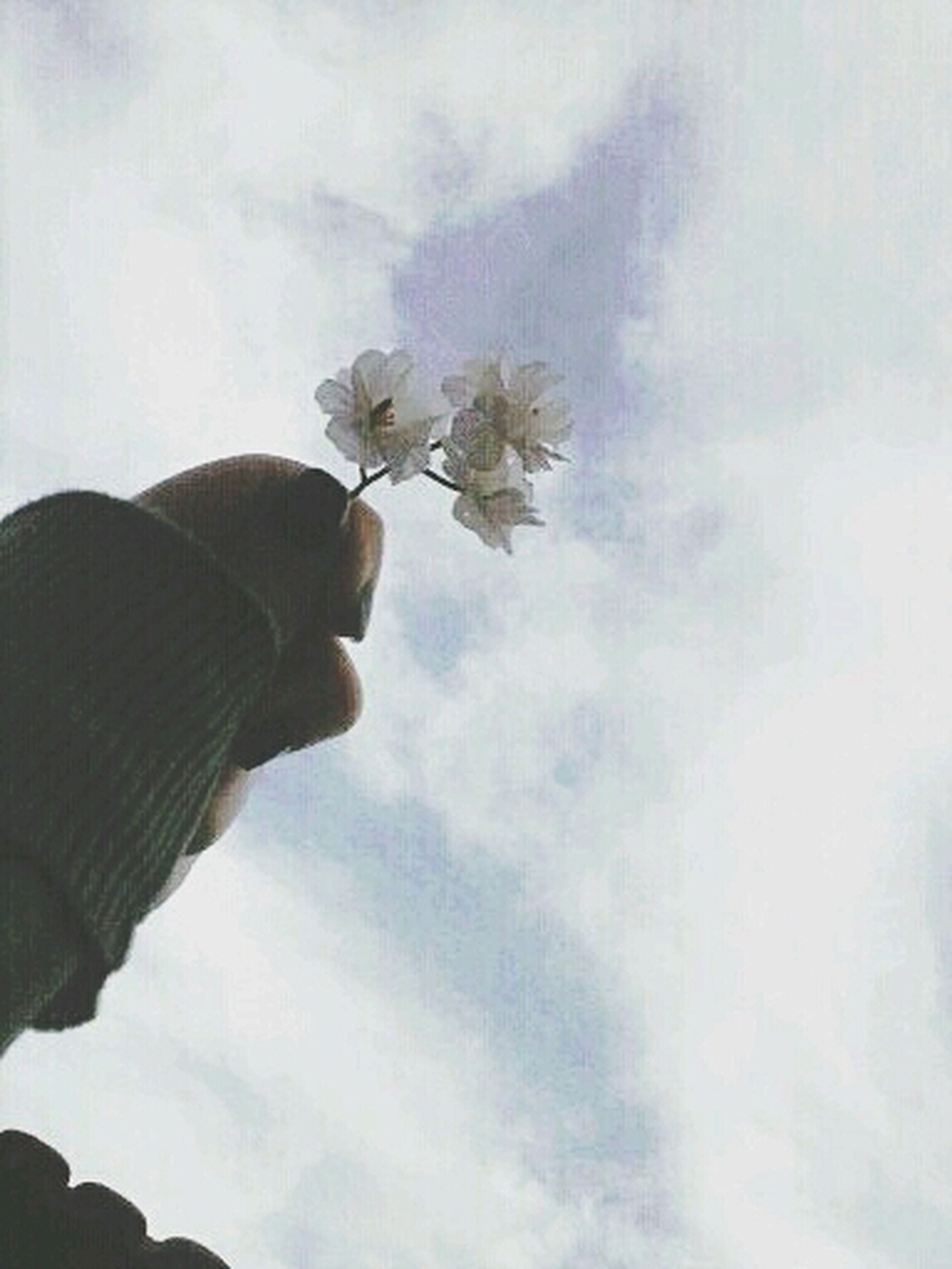 low angle view, flower, sky, growth, fragility, nature, freshness, beauty in nature, cloud - sky, stem, cloud, plant, day, petal, leaf, close-up, no people, outdoors, flower head, tree