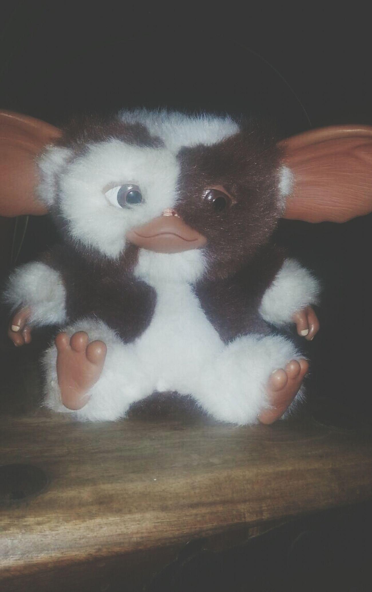 Gremlins Gizmo Cute
