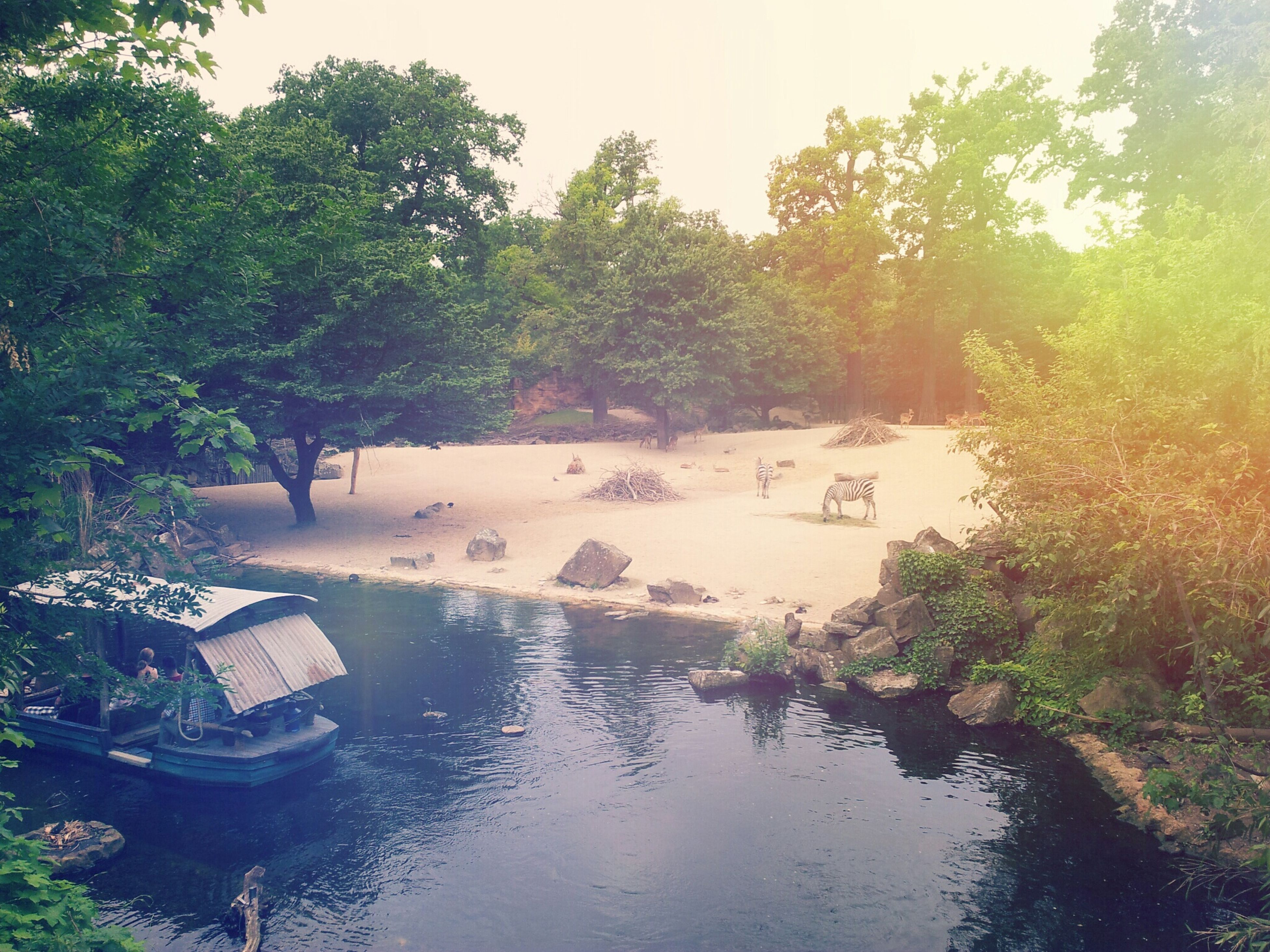 tree, water, tranquility, nature, tranquil scene, nautical vessel, scenics, growth, beauty in nature, boat, waterfront, reflection, river, moored, day, forest, lake, idyllic, outdoors, green color