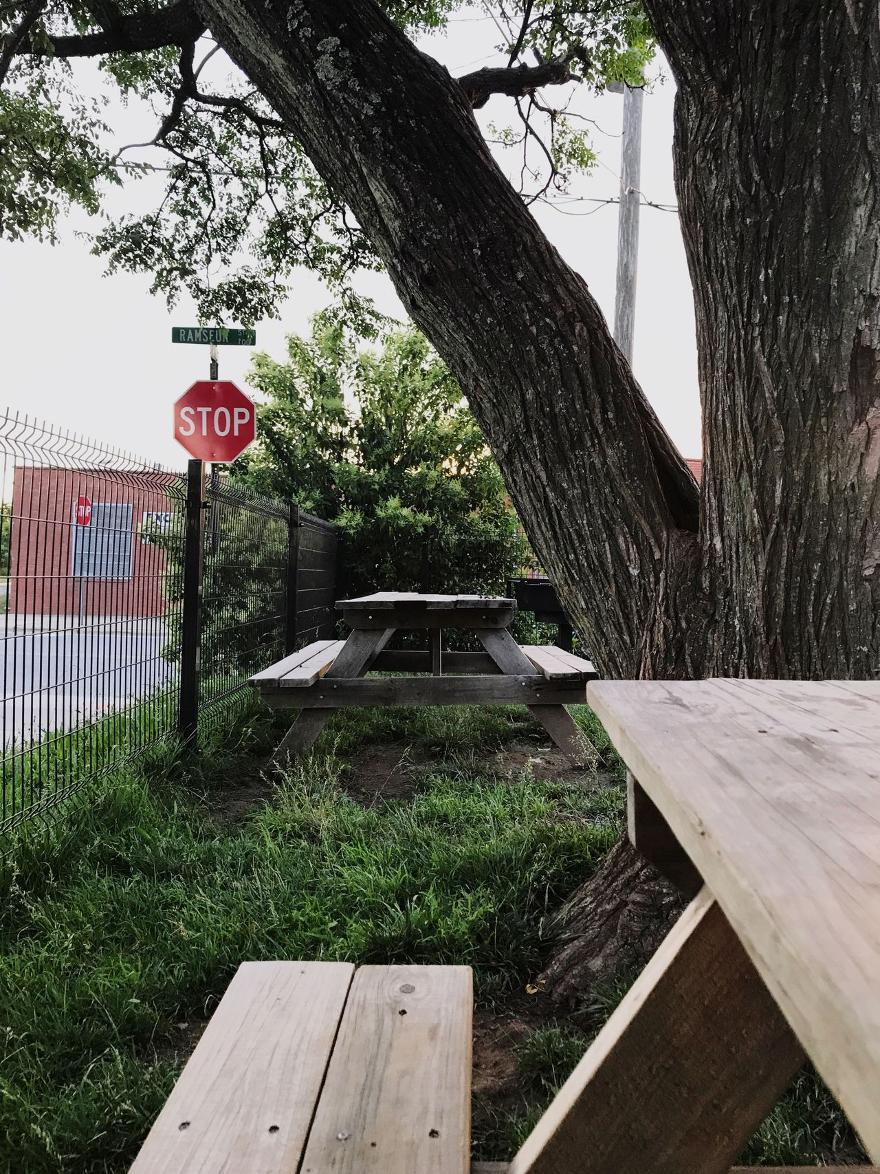 Urban picnic. Tree Wood - Material Tree Trunk Communication Day Built Structure Outdoors No People Architecture Grass Nature Sky Stop Sign Fence Urban Picnic Table Sign