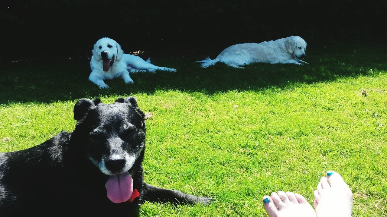 Pets Grass Dog Domestic Animals Mammal Animal Themes Human Body Part Green Color Outdoors Low Section One Person Nature Day Sunshine Day Spring Sun Human And Dog Soulmate Canine Guardian Angel Canine Love :) Womansbestfriend  Rest & Relax Black Dog White Dogs Relaxing Moments Relaxing Time