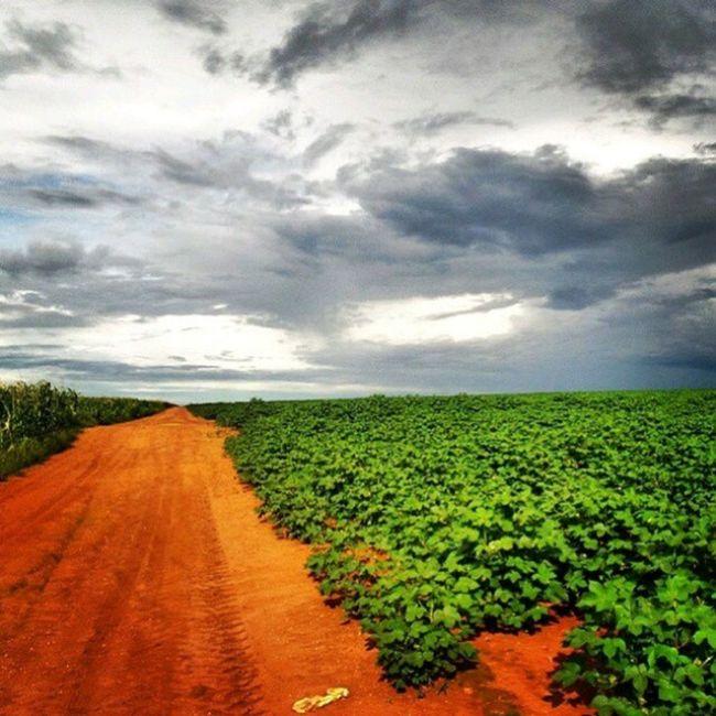 Sapezal-MT Foto: @lucastorres26 _______________________________________________Campo Lavoura Producao Economia Trabalho Safra Safrinha Algodão Milho Farm Agriculture Cotton Agro Corn Roca Agronomia Agricultura Fazenda CentroOeste Bresil  Brasil Brazil Brazilien MatoGrosso_Brasil Southamerica World SouAgro MatoGrosso Brasil