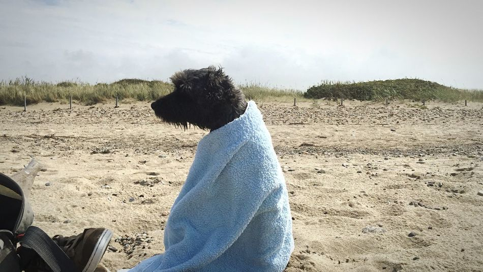 the water is too cold and wet Summer Dogs Dog I Love My Dog Ostsee