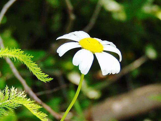 Fleur ♡