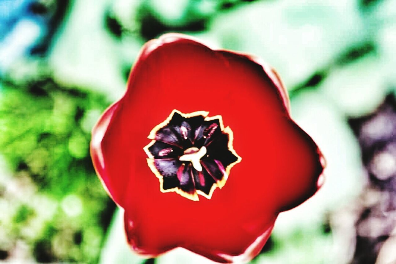 Fleurs Du Jardin Fleur Jardin printemps France Hdr_Collection Seine Et Marne Flower Garden
